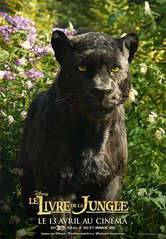 Le Livre de la jungle (Disney) le film sortie le 13 avril 2016 - Page 2 12278951_1154463371239830_4019064456799792423_n